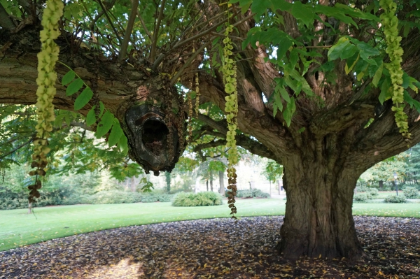 Bomen In Tuin : Monumentale bomen in de tuin landgoed heerenbeek